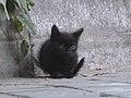 Gato callejero en Madrid 10a.jpg