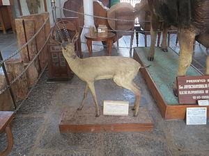 Gass Forest Museum - Image: Gauss museum Chinkara