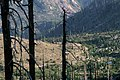 Gifford Pinchot National Forest, Mt St Helens NVM , old growth snags post May 18th (36361238773).jpg