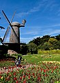 Golden Gate Park - Dutch Windmill - March 2018 (1765).jpg