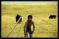 Gonghe, Hainan, Qinghai, China - panoramio - neverdance (20).jpg