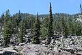 Grand Teton NP 2014 06.JPG