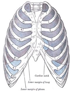 costodiaphragmatic recess wikipedia