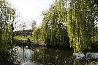 Brookvale Park - Green shoots of spring – geograph.org.uk – 1236278