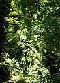Greens (29241277588).jpg