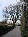 Greenway Road near Bathill Well, approaches to Galmpton - geograph.org.uk - 369555.jpg