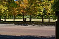 Greenwich Park - Blackheath Ave - View ENE I.jpg