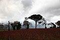 Groot Constantia - panoramio (15).jpg