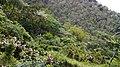 Guintubdan Mountain Resort, La Carlota City, Negros Occidental, Philippines - panoramio (47).jpg