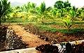 HAZRATH SYED SHAH VALI ULLA DARGAH ( THOPPUR DARGAH ) - panoramio (1).jpg