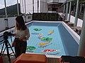 HK 香港南區 Southern District 薄扶林道 Pokfulam Road 瑪麗醫院 Queen Mary Hospital 3D立體地畫 painting golden fish blue pool June 2019 SSG 01.jpg
