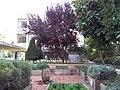HUJI VIEW 20120912 155541.jpg