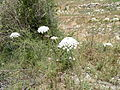 Hadassah Trail P1150482.JPG