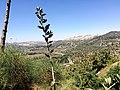 Hadassah View1.JPG