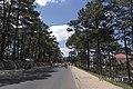 Hai Bên là Thông ở đà lạt - panoramio.jpg