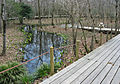 Hakone Botanical Garden of Wetlands 01.jpg