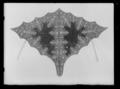 Halskappa för häst, ur en serie av sex (nr 6131-6136) - Livrustkammaren - 43430.tif