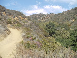 Franklin Canyon Park - Hastain Trail in Franklin Canyon Park, Los Angeles, California