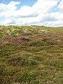 Heather flowering in the dunes - geograph.org.uk - 946383.jpg