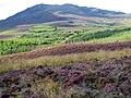 Heather moorland and forestry - geograph.org.uk - 535805.jpg