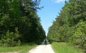 Two-track dirt road through dense woods