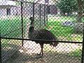 Henry Vilas Zoo IMG 2375.jpg