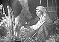 Henryk Poddębski - Rolnictwo - hodowla (131-7173).jpg