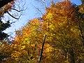 Herbst im Iberig Würenlingen - panoramio.jpg