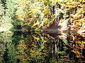 Herbstliches Spiegelbild.jpg