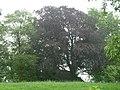 Herderen-Tumulus van Herderen (De La Brassinnestraat) (2).JPG