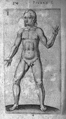 Wikipedia hermaphrodit Category:Statues of