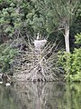 Heron's Nest - geograph.org.uk - 1325852.jpg