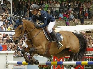 Zangersheide Belgian breed of warmblood sport horse