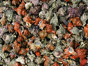 Muricidae - Numerous Hexaplex trunculus for sale in a fishmarket in Spain