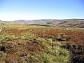 High moorland to the northeast of Muckle Knowe - geograph.org.uk - 571805.jpg