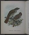 History of the birds of NZ 1st ed p134-2.jpg