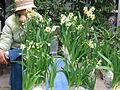 Hoa thuỷ tiên2.jpg