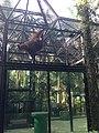 Hong Kong Zoological and Botanical Gardens 15.jpg
