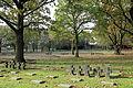 Hooglede Soldatenfriedhof R06.jpg