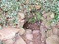 Hope Bagot Spring Well - geograph.org.uk - 769639.jpg