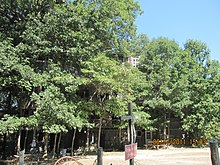 the exterior of the treehouse