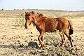 Horse Indian village 03.jpg