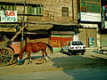 Horse and car.jpg