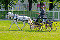 Horse driving at Stiegl 2011 12.jpg