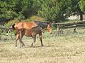 Horse mother and calf.jpg