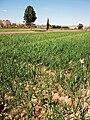 Horta de Benimaclet.JPG