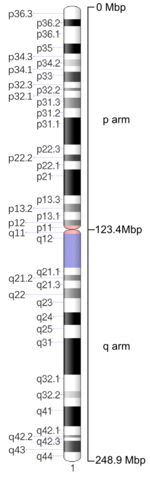 Map of Chromosome 1