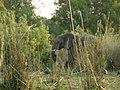 Hwange, Zimbabwe - panoramio (5).jpg