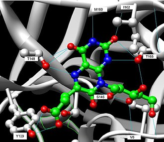 Riboflavin synthase - Image: Hydrogen Bonding C Terminal Domain
