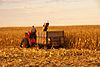 IHC corn picker, Story County, Iowa, 2011.jpg